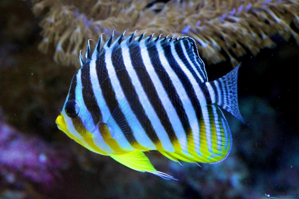 meerwasserfische fotogalerie blog aquapro2000