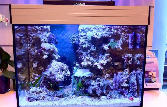 süßwasser oder meerwasser aquarium