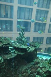 Blick aus dem AquaDom Berlin