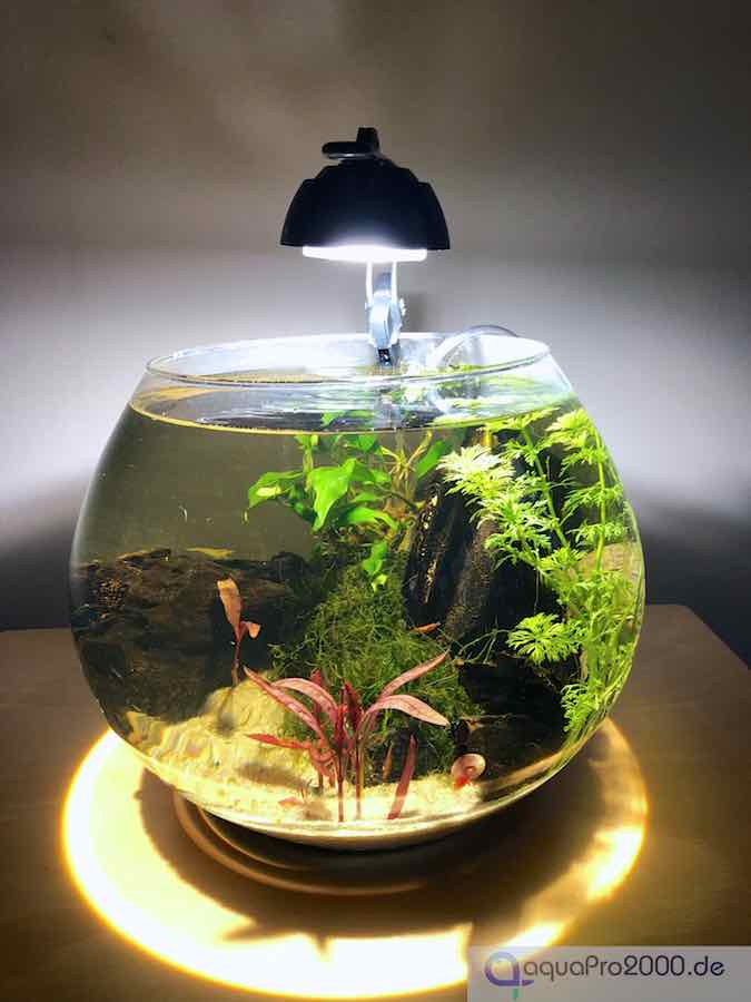 verboten oder nicht goldfisch im glas oder kugelaquarium. Black Bedroom Furniture Sets. Home Design Ideas