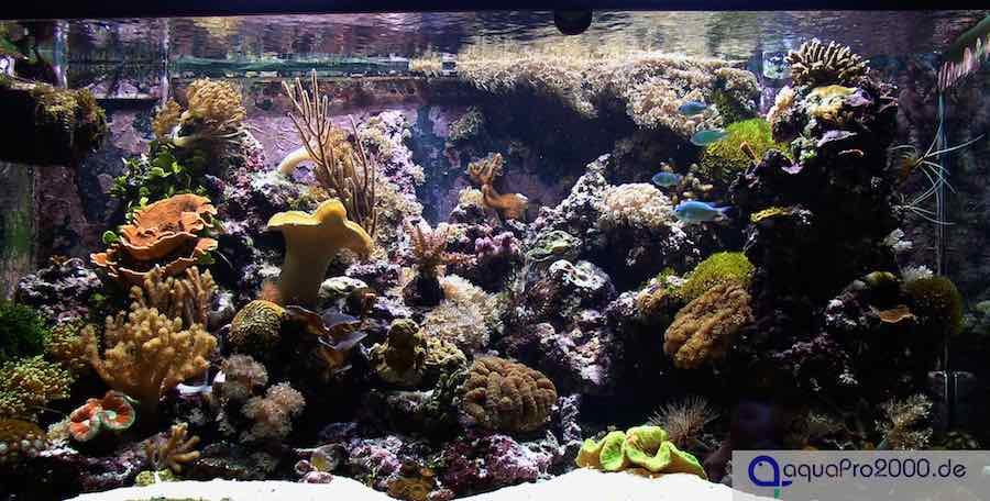 Strömungspumpe im Meerwasseraquarium