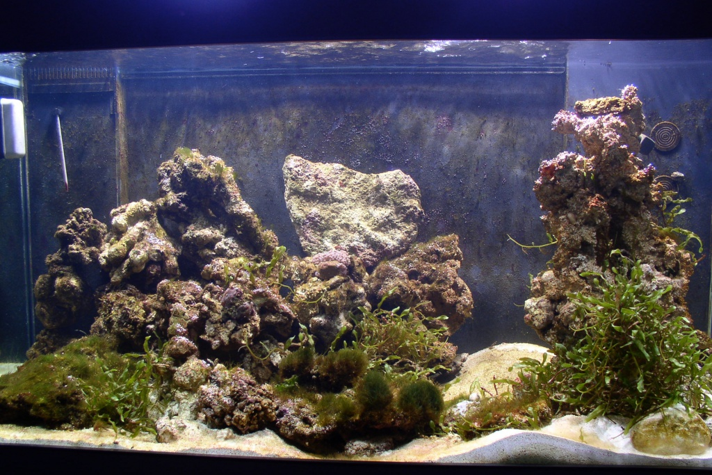 Einfahrphase Meerwasser Bild 3