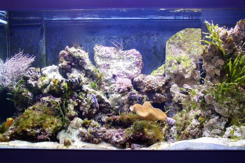 Einfahrphase Meerwasser Bild 5