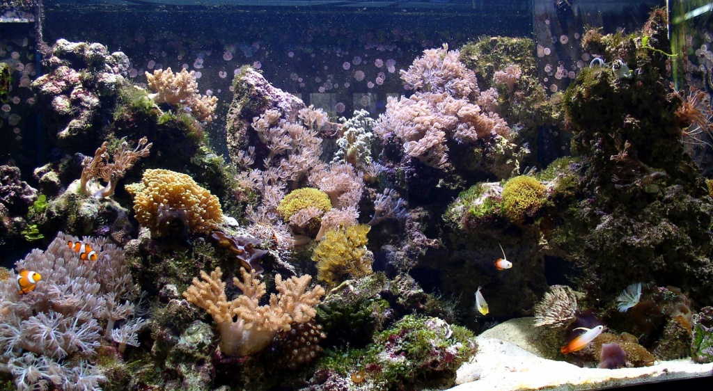 Meerwasseraquarium nach 4 Monaten