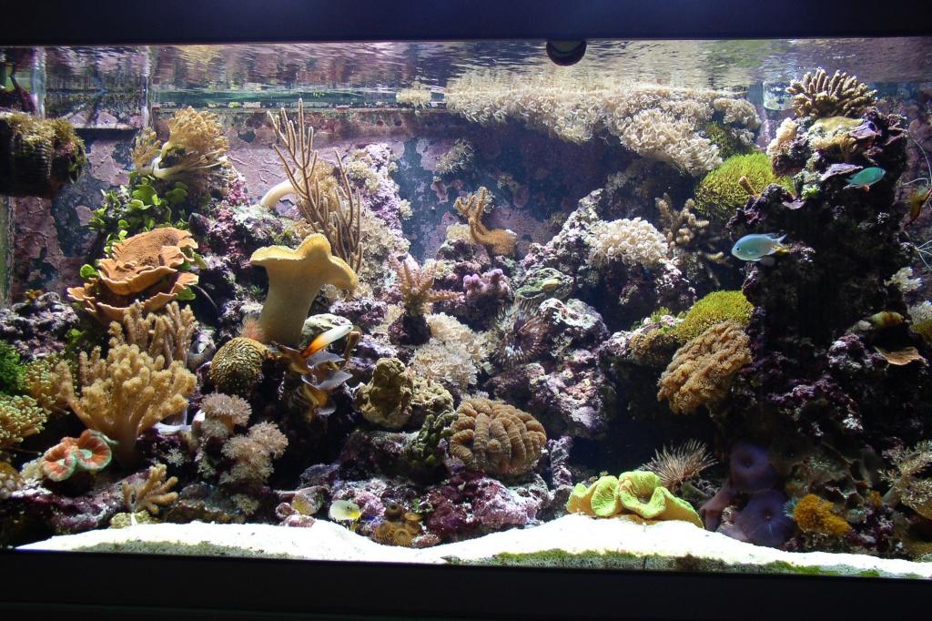Meerwasseraquarium nach 14 Monaten