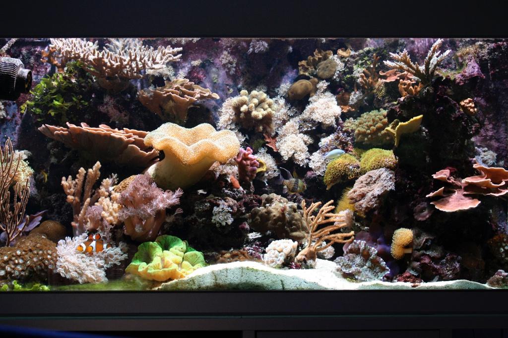 Meerwasseraquarium nach 26 Monaten