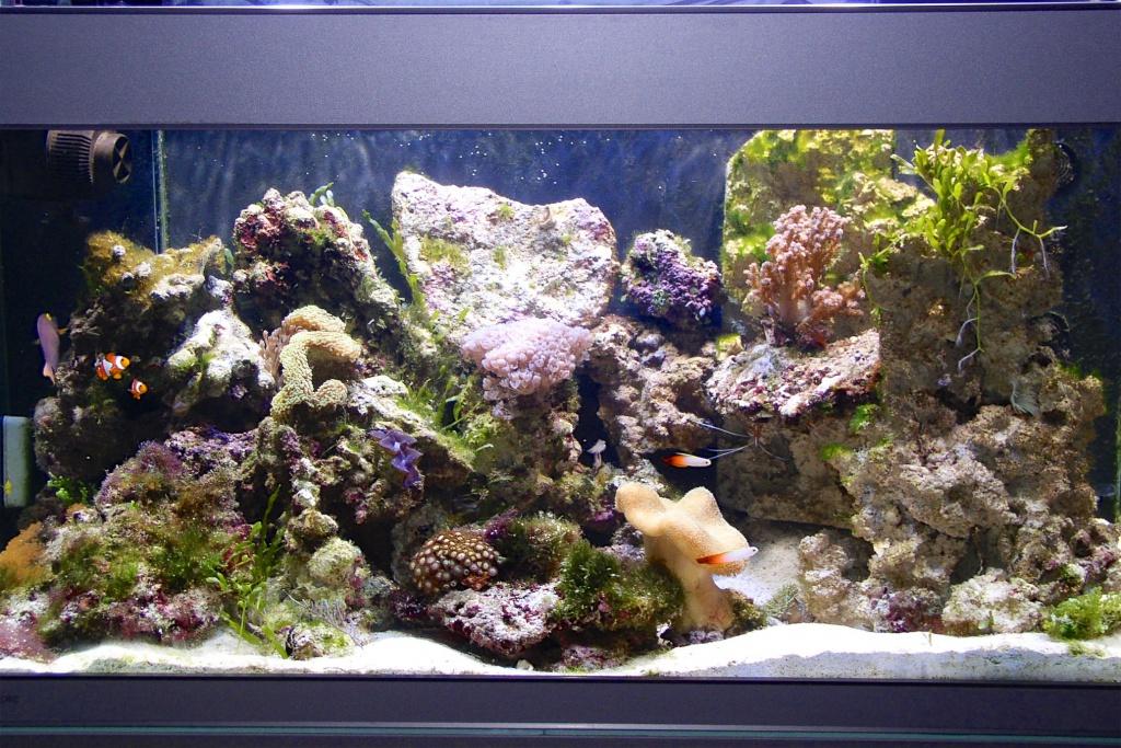 Meerwasseraquarium Besatz mit Fischen