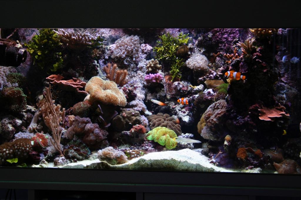 Meerwasseraquarium nach 20 Monaten