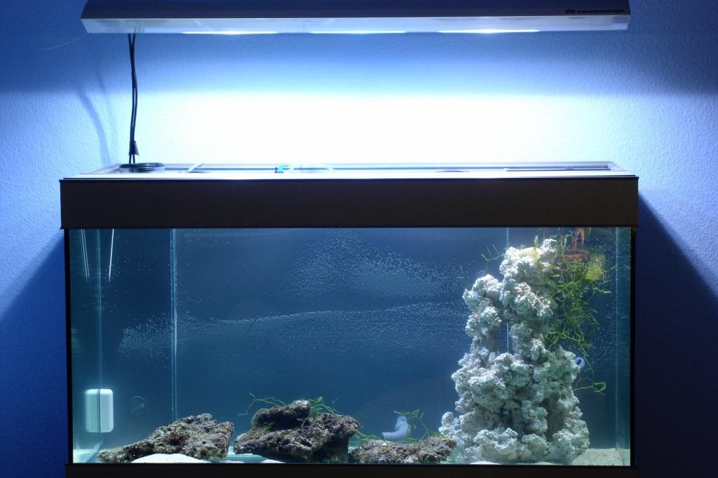 Einfahrphase Meerwasser Bild 1