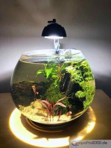 Goldfischglas ohne Fische