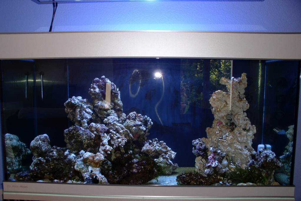 Einfahrphase Meerwasser Bild 2