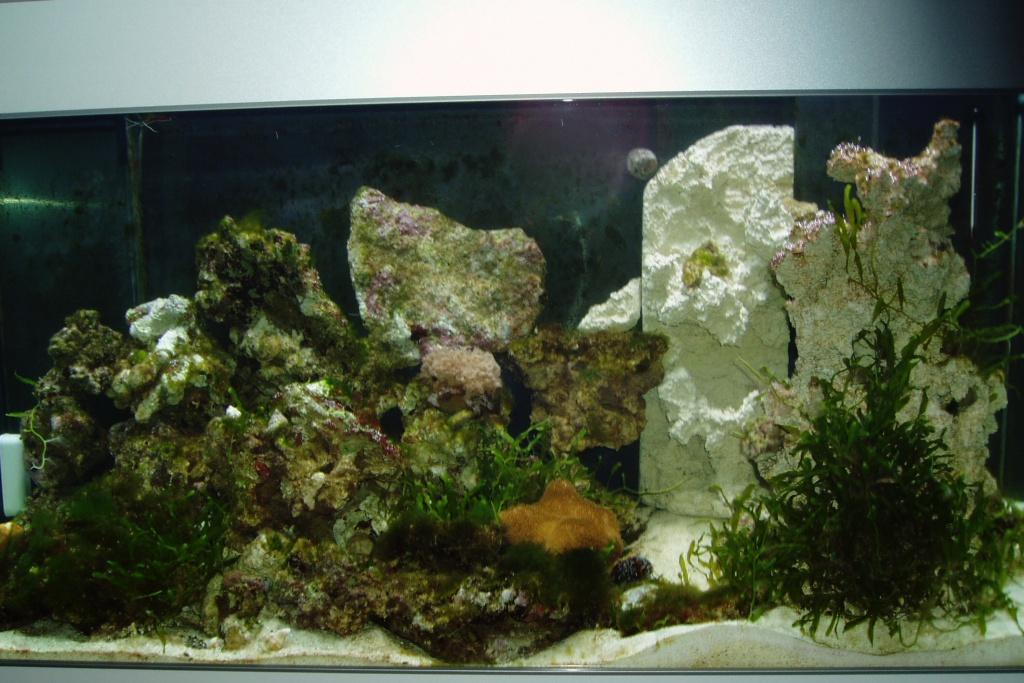 Einfahrphase Meerwasser Bild 4
