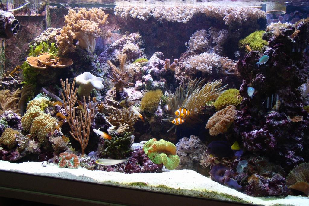Meerwasseraquarium nach 1 Jahr