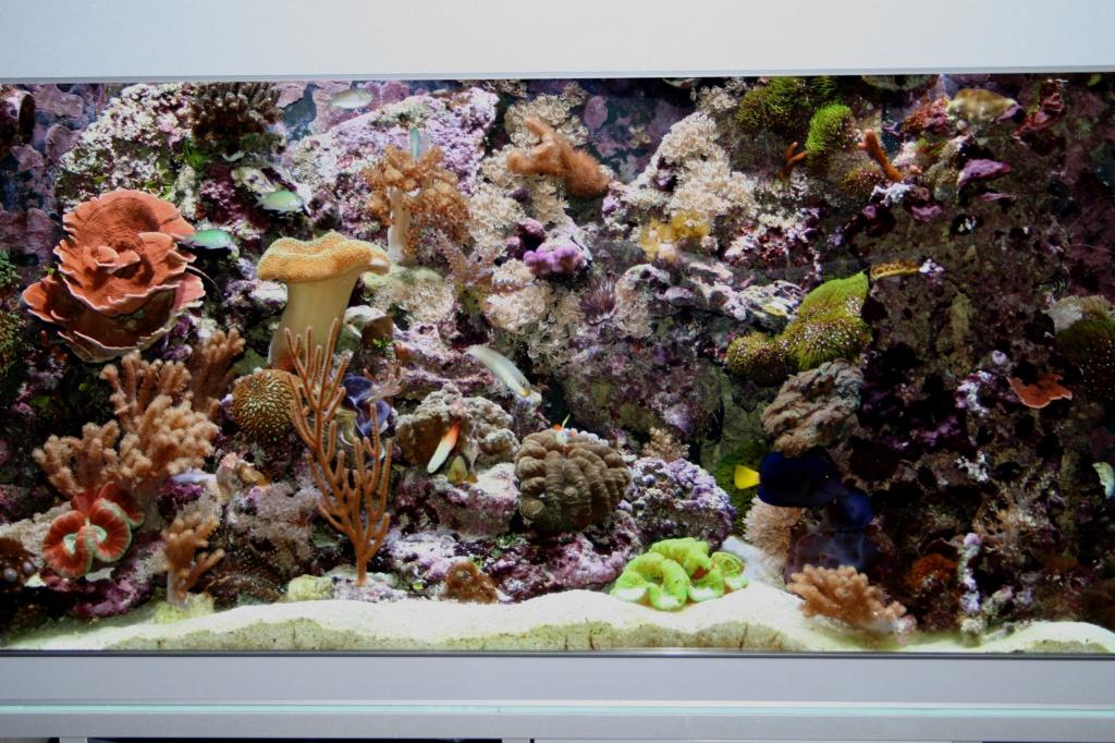 Meerwasseraquarium nach 16 Monaten