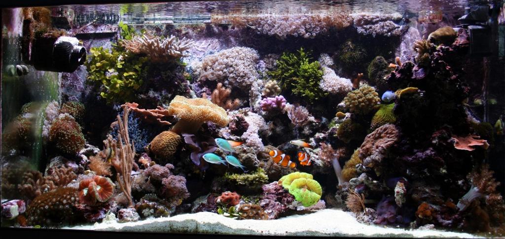 Meerwasseraquarium nach 18 Monaten
